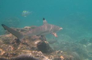 タオ島 ダイビング ツインズ