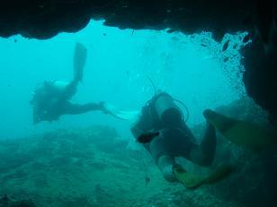 タオ島|ダイビング