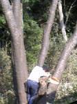 木が倒れるぞ