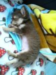 寝てるスパ