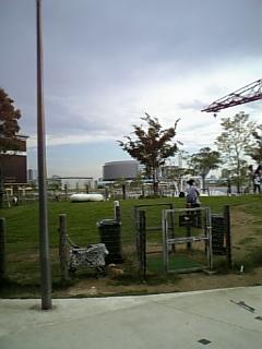 20080814豊洲ドッグラン1