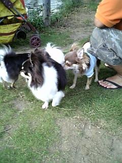 20080813豊洲ドッグラン12