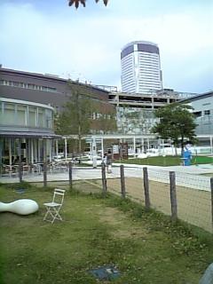 20080813豊洲ドッグラン5