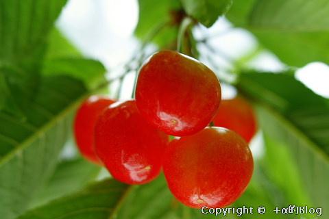 cherry0906aa_eip.jpg