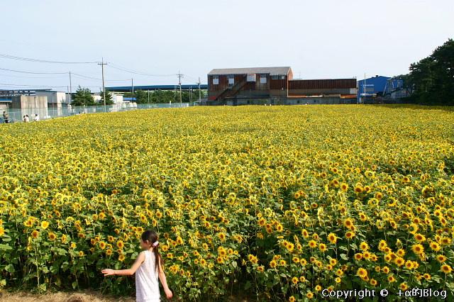 himawari0909b_eip.jpg