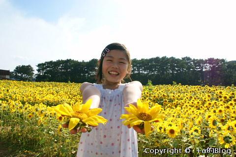 himawari0909c_eip.jpg