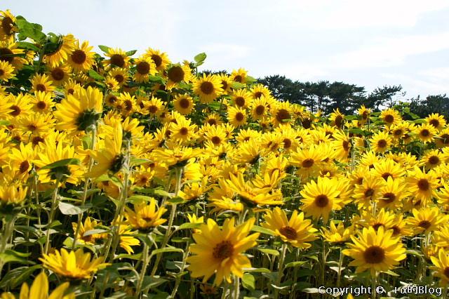 himawari0909d_eip.jpg