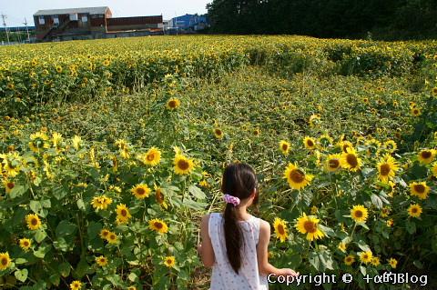 himawari0909g_eip.jpg