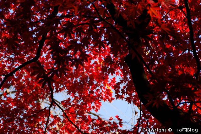 hirosaki091130a_eip.jpg