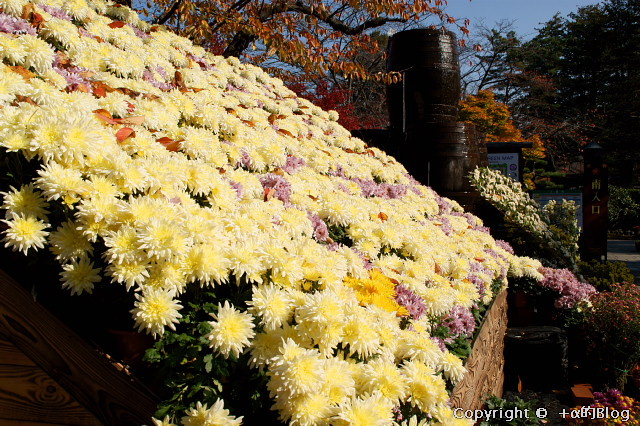 hirosaki091144_eip.jpg