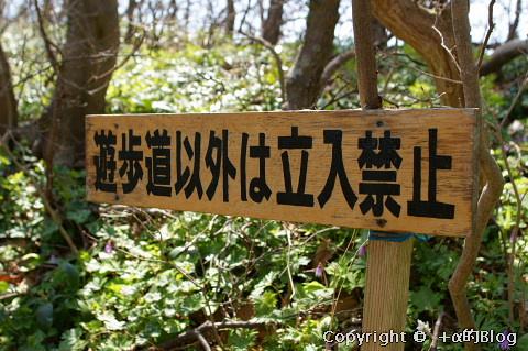 katakuri090408_eip.jpg