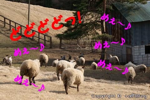 kawayo0903ii_eip.jpg