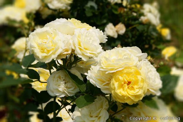 rose0903_eip.jpg