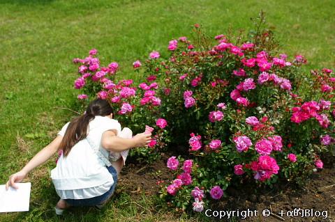 rose0904_eip.jpg