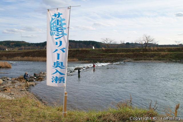 salmon0911a_eip.jpg