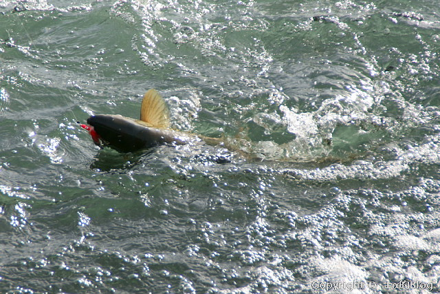 salmon0911d_eip.jpg