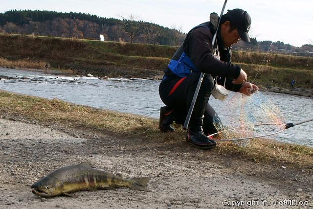 salmon0911g_eip.jpg