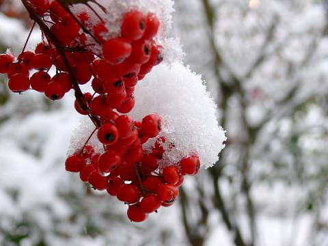 snow08c.jpg