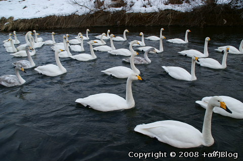swan0901a_eip.jpg
