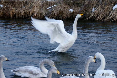 swan0901c_eip.jpg