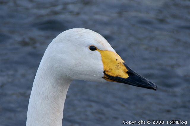 swan0901d_eip.jpg