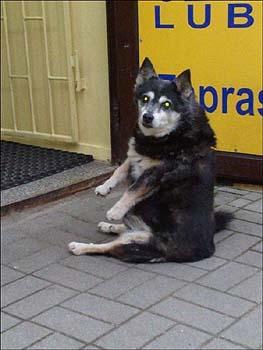 ポーランド 飼い主を待つ