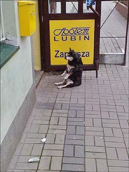 お座りして飼い主を待つ犬