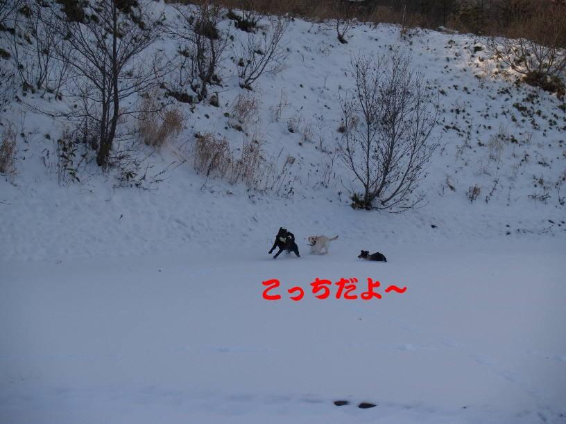 PC140972.jpg