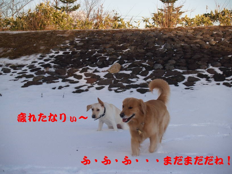 PC141002.jpg