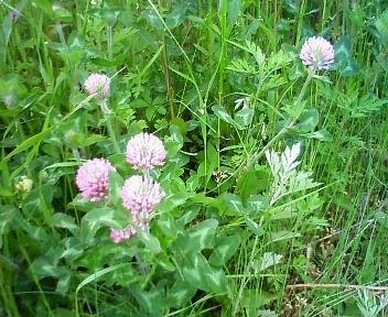 初夏の花2