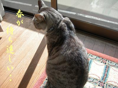 MOMO太郎