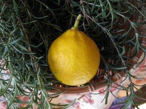 我が家のレモン