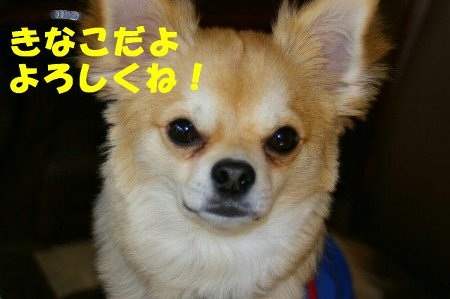 kinakomoji.jpg