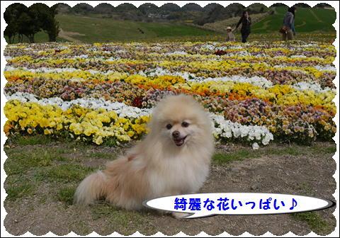 花さじき2011①