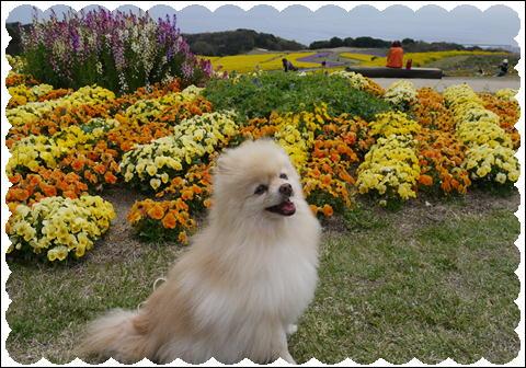 花さじき2011②