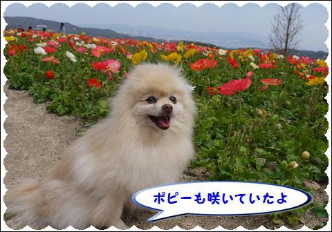 花さじき2011③