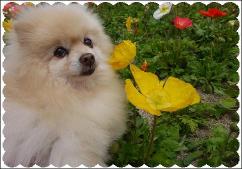 花さじき2011④
