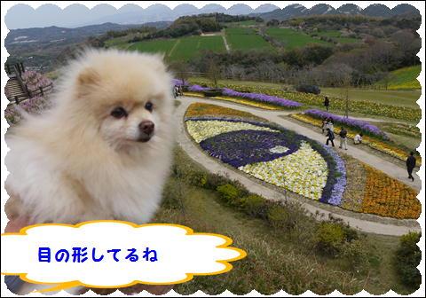 花さじき2011⑤