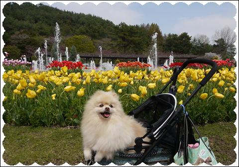 フラワーセンター201104②
