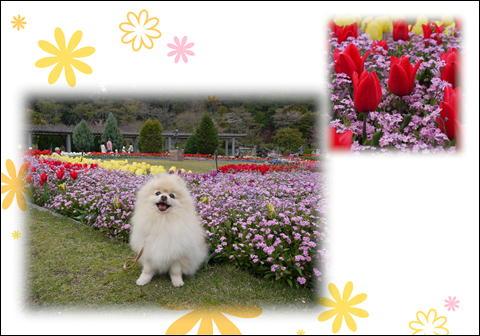 フラワーセンター201104⑤
