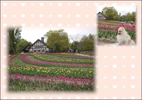 ドイツの森2011②