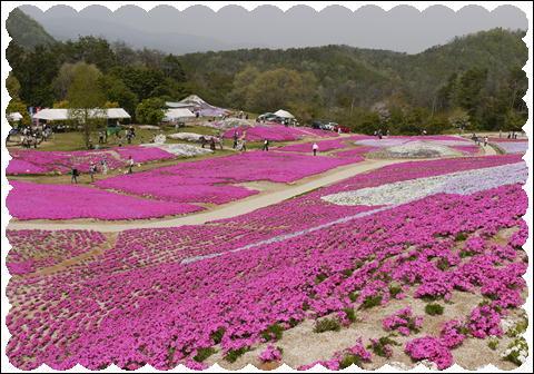 世羅高原①