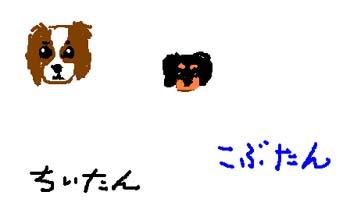 20050320221428.jpg