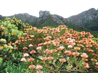 南アフリカ視察 2005 103