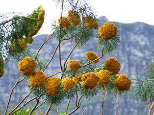 南アフリカ視察 2005 090