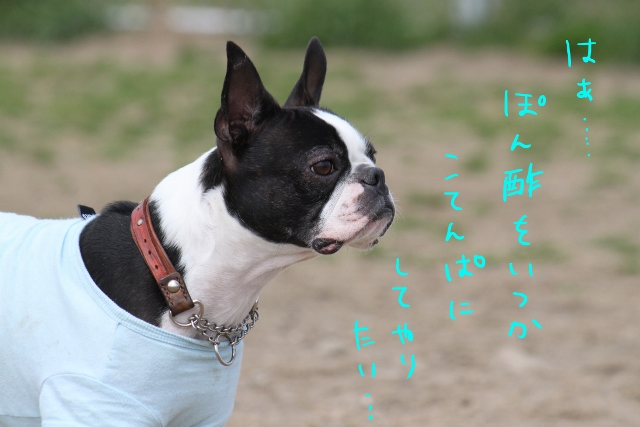 海ふれ 121_edited-1 (640x427)