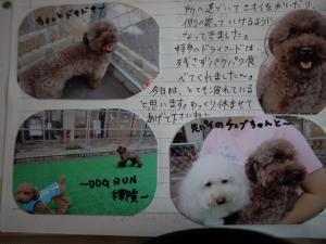 002_convert_20110713113859.jpg