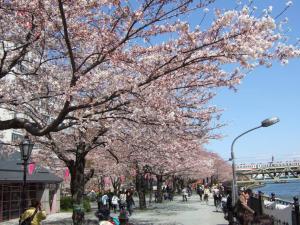 001隅田川桜