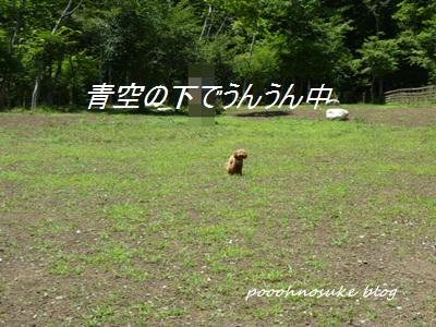 P1130468.jpg