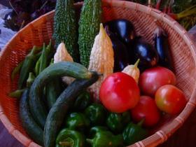 低農薬野菜